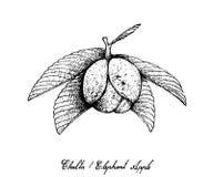 Mano dibujada de Chalta o de las frutas de Apple del elefante Fotos de archivo libres de regalías