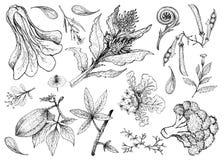 Mano dibujada de verdura frondosa y de ensalada libre illustration