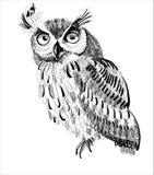 Mano-dibujo del búho en un fondo blanco Foto de archivo libre de regalías