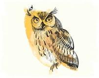 Mano-dibujo del búho en un fondo de la acuarela Imagen de archivo libre de regalías