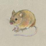 mano-dibujo Ratón en fondo gris Imagenes de archivo
