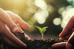 mano due che aiuta per la piantatura albero piccolo e dell'alba in giardino fotografie stock