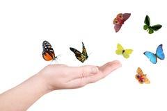 Mano e farfalla Fotografie Stock Libere da Diritti