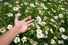 Mano e fiori Fotografia Stock Libera da Diritti