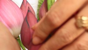 Mano e mazzo Lotus stock footage