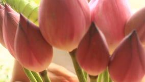 Mano e mazzo Lotus video d archivio