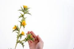 Mano en contacto con flores fotos de archivo libres de regalías