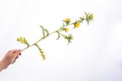 Mano en contacto con flores imagenes de archivo