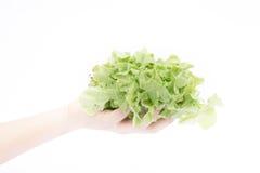 Mano en el grupo de verdura de ensalada en el fondo blanco Imagen de archivo libre de regalías