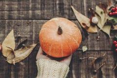 Mano en el suéter que sostiene la calabaza con las hojas y las bayas en rusti Imagenes de archivo