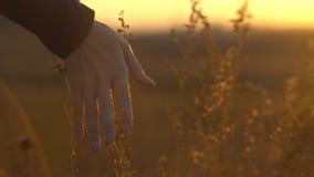 Mano en la puesta del sol en hierba de la estepa Hierba conmovedora de la estepa de la mano en sol imágenes de archivo libres de regalías