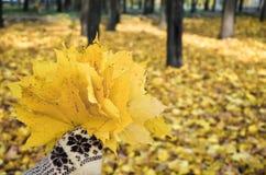 Mano en las manoplas que sostienen un ramo de hojas Foto de archivo