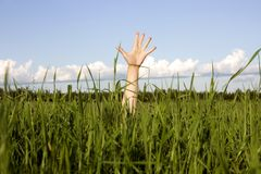 Mano en una hierba fotografía de archivo libre de regalías