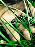 Mano in erba verde Fotografia Stock Libera da Diritti