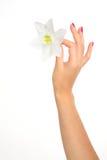 Mano femenina con la flor Fotos de archivo libres de regalías