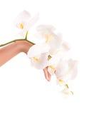 Mano femenina con las flores de la orquídea Imagen de archivo libre de regalías