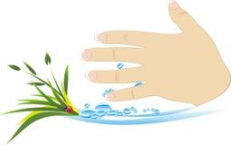 Mano femenina con las plantas y las gotas del agua stock de ilustración