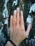 Mano femenina en un árbol de abedul de la corteza Fotografía de archivo libre de regalías