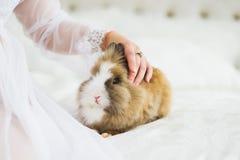 Mano femenina que acaricia un conejo Foto de archivo libre de regalías