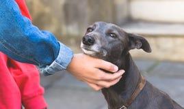 Mano femenina que acaricia un perro A Imagen de archivo libre de regalías