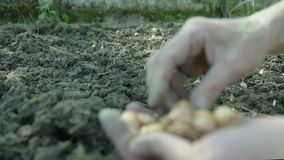 Mano femenina que planta las semillas en la tierra almacen de video