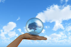 Mano femenina que sostiene el árbol en globo Imágenes de archivo libres de regalías