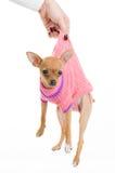Mano femenina que sostiene el perro divertido Fotografía de archivo