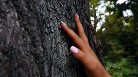 Mano femenina que toca el árbol almacen de metraje de vídeo