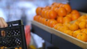 Mano femminile che dispone i mandarini freschi sullo scaffale di negozio video d archivio