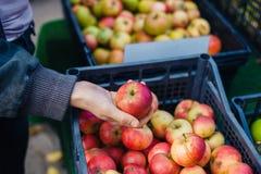 Mano femminile che tiene una mela organica fotografia stock libera da diritti