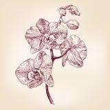 Mano floral de la orquídea dibujada Fotos de archivo