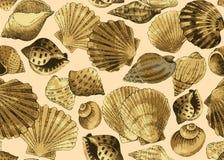 A mano fondo inconsútil dibujado conchas marinas Imagen de archivo