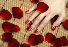 Mano hermosa con la manicura perfecta del rojo del clavo Foto de archivo libre de regalías