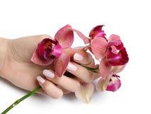 Mano hermosa con la manicura y la orquídea del clavo Fotografía de archivo libre de regalías