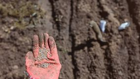 Mano humana con las semillas para plantar imagen de archivo