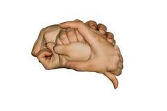 mano humana junto en forma del cerebro humano Fotografía de archivo libre de regalías