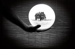 Mano humana que sostiene una esfera blanca con escena del paisaje Fotos de archivo