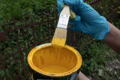 Mano inguantata che giudica una spazzola inzuppata in pittura gialla, flussi in eccesso della pittura nuovamente dentro la latta immagine stock