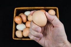 Mano maschio che giudica un uovo del pollo preso da un canestro su un fondo nero fotografia stock libera da diritti