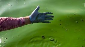 Mano maschio del primo piano in acqua di fiume di scavatura del guanto medico con le alghe verdi stock footage