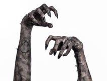 Mano negra de la muerte, el caminar absolutamente, tema del zombi, tema de Halloween, manos del zombi, fondo blanco, manos de la  Fotografía de archivo