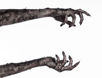 Mano nera della morte, il morto che cammina, tema dello zombie, tema di Halloween, mani dello zombie, fondo bianco, mani della mu