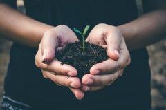 Mano per la piantatura degli alberi di nuovo alla foresta immagini stock