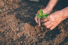 Mano per la piantatura degli alberi di nuovo alla foresta, creante consapevolezza per amore selvaggio, concetto della pianta selv fotografia stock