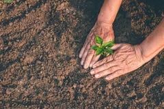 Mano per la piantatura degli alberi di nuovo alla foresta, creante consapevolezza per amore selvaggio, concetto della pianta selv immagine stock libera da diritti