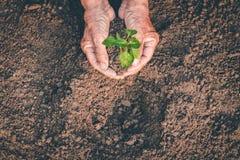 Mano per la piantatura degli alberi di nuovo alla foresta, creante consapevolezza per amore selvaggio, concetto della pianta selv fotografia stock libera da diritti