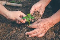 Mano per la piantatura degli alberi di nuovo alla foresta, creante consapevolezza per amore selvaggio, concetto della pianta selv immagine stock