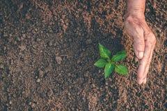 Mano per la piantatura degli alberi di nuovo alla foresta, creante consapevolezza per amore selvaggio, concetto della pianta selv fotografie stock
