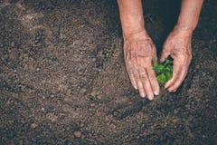 Mano per la piantatura degli alberi di nuovo alla foresta, creante consapevolezza per amore selvaggio, concetto della pianta selv immagini stock