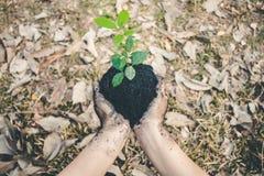 Mano per la piantatura degli alberi di nuovo alla foresta, creante consapevolezza per amore selvaggio, concetto della pianta selv fotografie stock libere da diritti